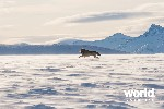 Arctic Ocean Adventure