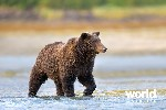 Bear Viewing on Kodiak Island