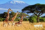 Best of East Africa