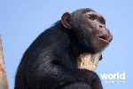 Best of Uganda - Gorillas, Chimpanzees & Wildlife