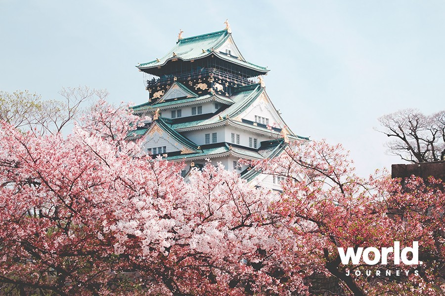 Cherry Blossom Japan, March 2020