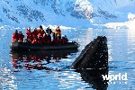 Falkland Islands, South Georgia, Antarctica : Wildlife Cruise