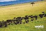 Ngorongoro & The Serengeti