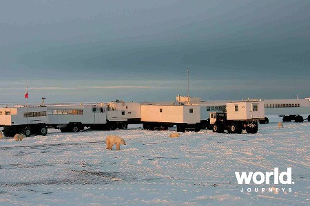 Polar Bears at Legendary Cape Churchill - The Ultimate Polar Bear Experience