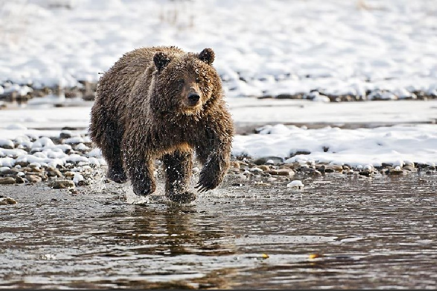 Yukons Bear Cave Mountain Grizzly Bear Viewing Tour