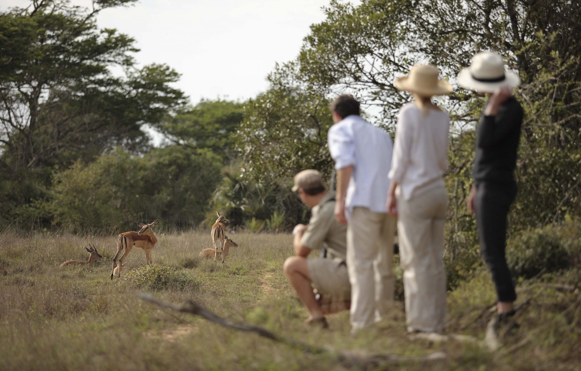 African Safari Guided Bush Walk