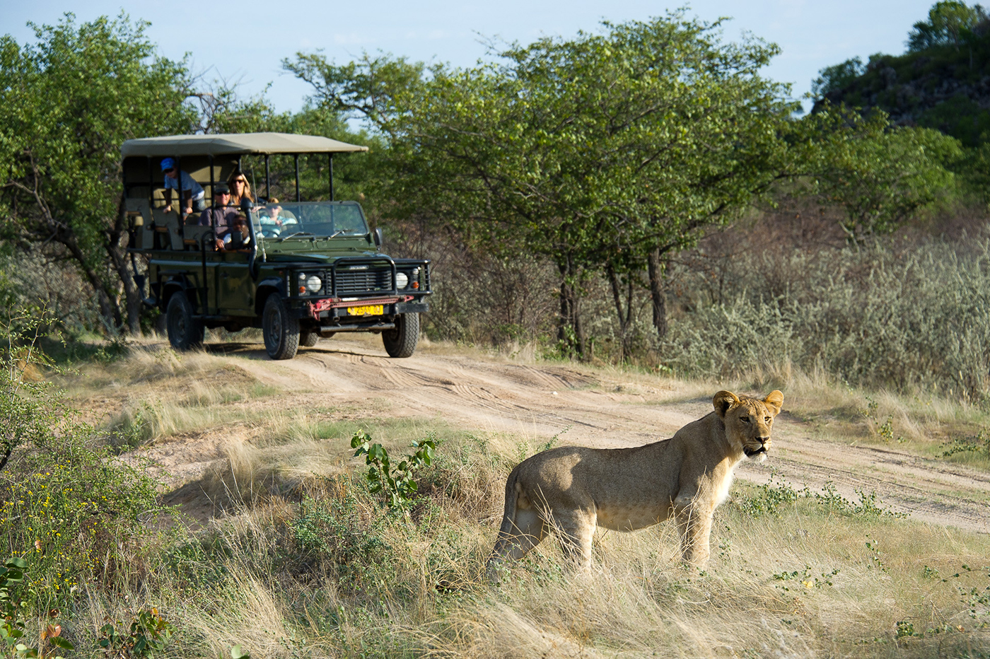 Game drive in Ongava Game Reserve