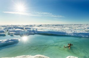 Swimming, Arctic Watch