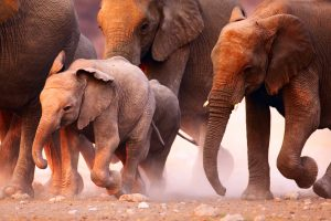 Elephants in Etosha National Park, Namibia